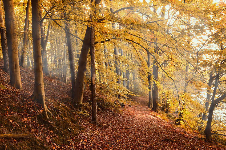 ガイアの夜明け|この秋に行きたい!!新たなジャンル「癒しの旅」とは!?